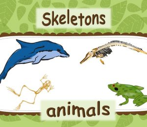 PPT - Animal Skeletons Powerpoint Presentation