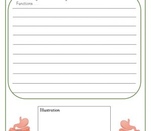 Digestive System Functions Information Book