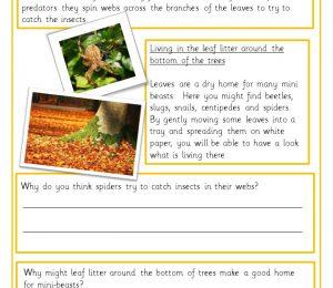 comprehension activity micro habitats Year 2 KS1 literacy science