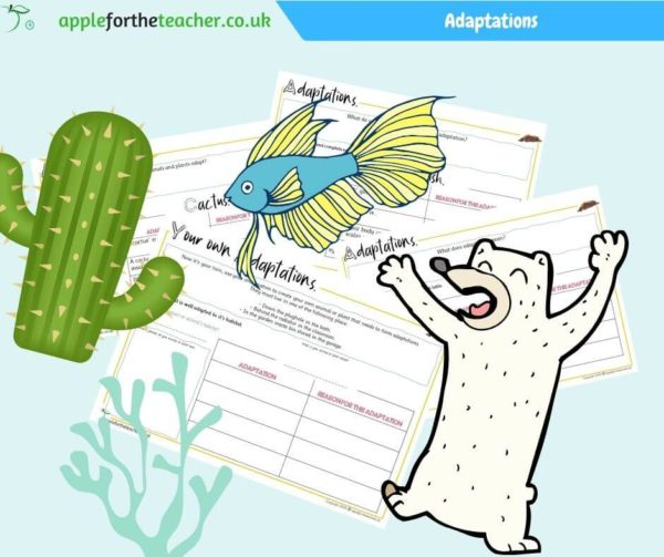 Adaptation Plants and Animals Activity