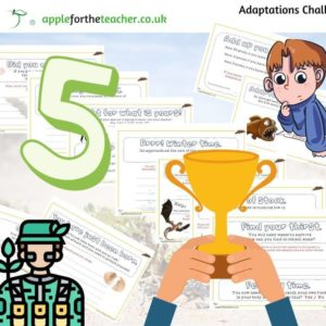 Adaptations Challenge Activity
