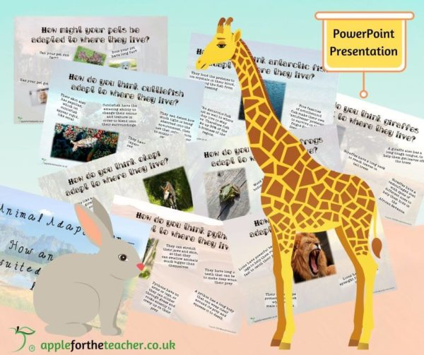 Animal Adaptations Powerpoint Presentation KS2