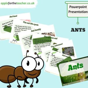 Ants Powerpoint Presentation Minibeasts
