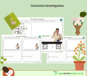 Carnation Investigation Recording SEN Senior