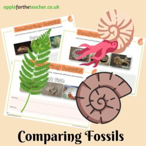Comparing fossils Activity sheet