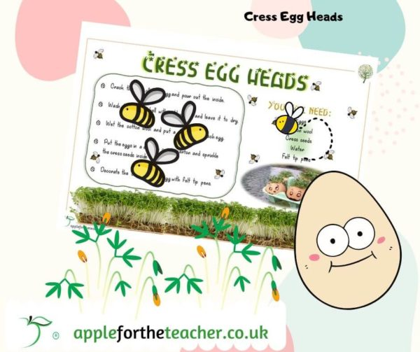 Cress Egg Head