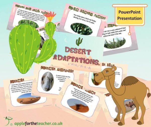 Desert Adaptions powerpoint presentation
