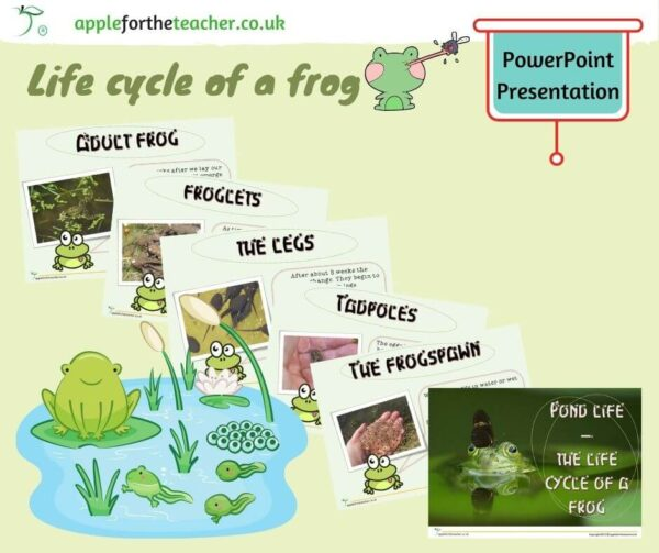 Life cycle of a frog powerpoint presentation
