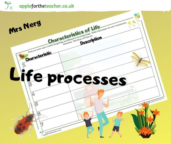 Life processes Mrs Nerg characteristics