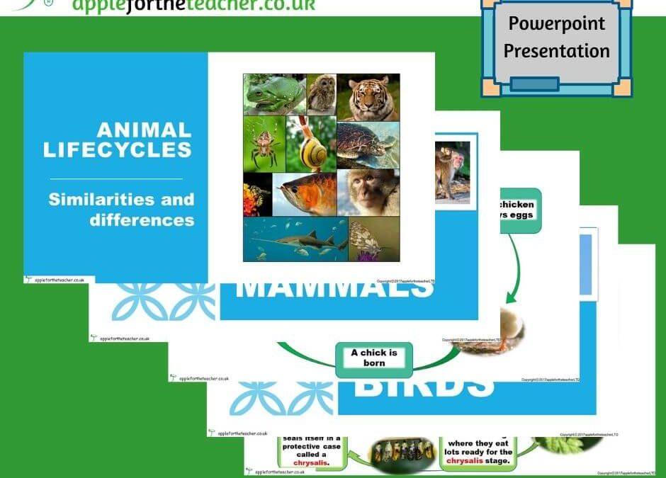 Lifecycles Of Different Animals Powerpoint Presentation