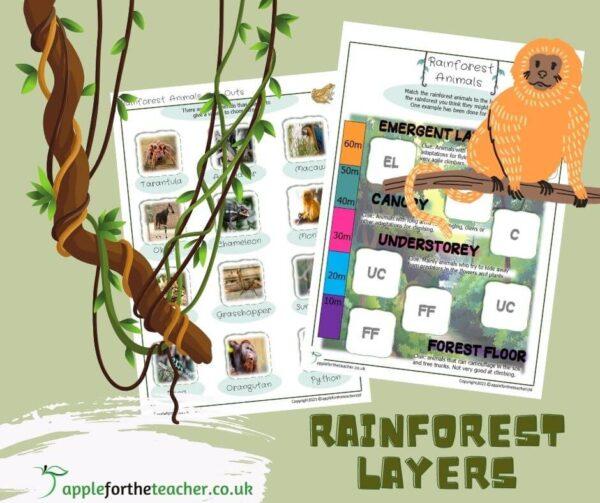 Rainforest Layers Activity