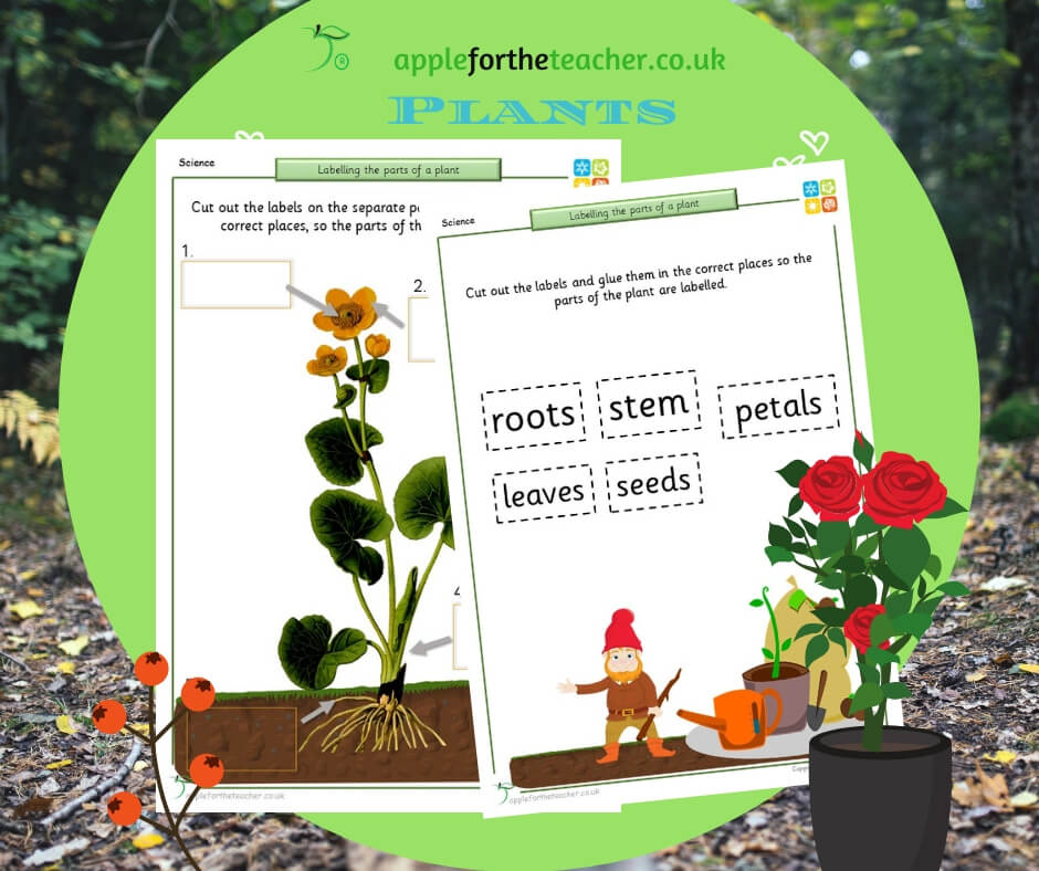Labelling Parts Of A Flower | Apple For The Teacher Ltd
