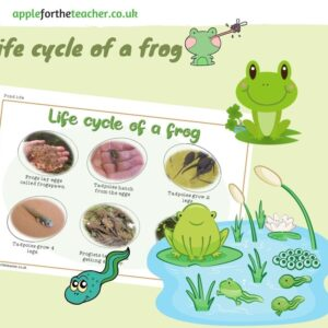 lifecycle of a frog