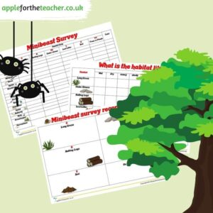 minibeast survey activity KS1