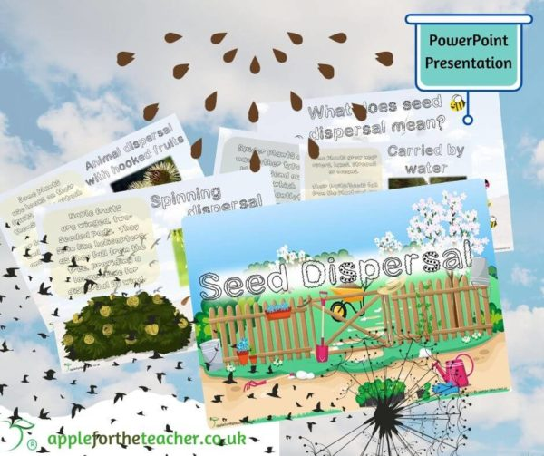 seed dispersal powerpoint presentation