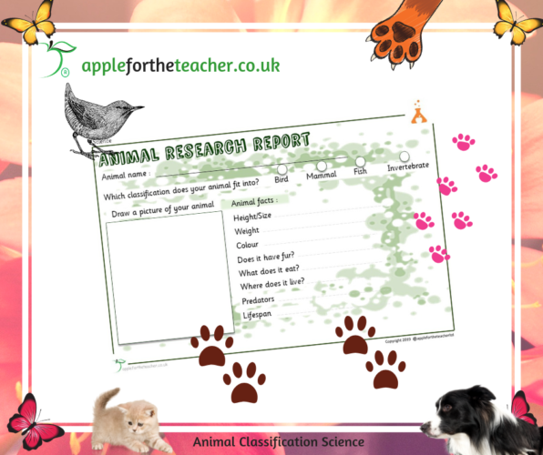 Animal Classification Research Activity