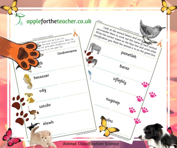 Animal Classification Word Scramble