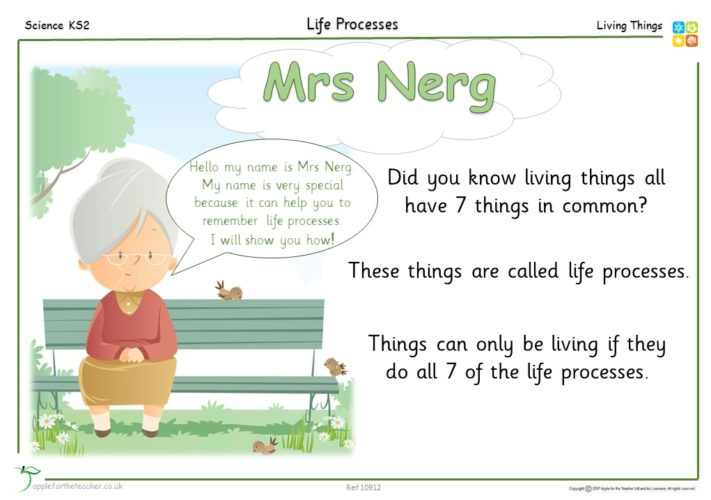 Year 4 Free Resource | Life processes Mrs Nerg