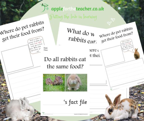 Rabbit Habitat Investigation
